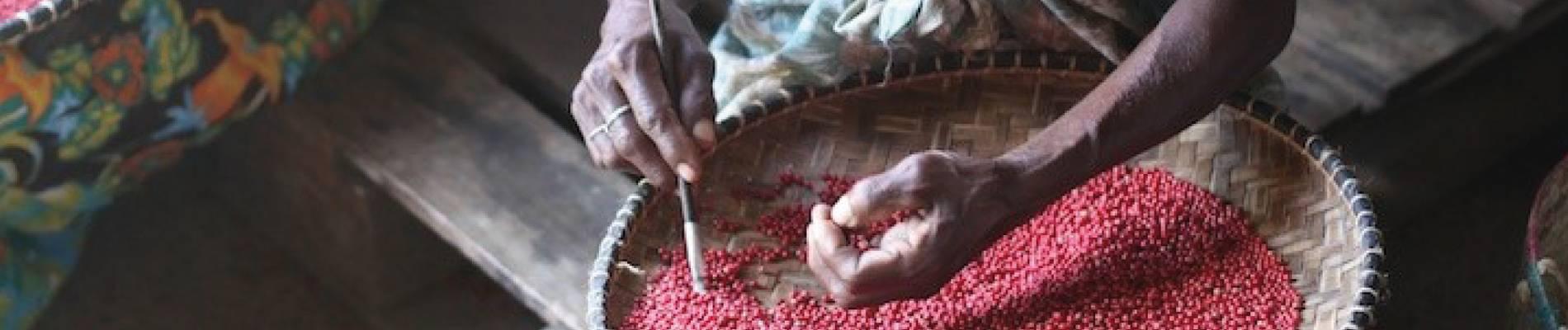 commerce-équitable-agriculture-bio-biopartenaire-label-image-d-illustration-article